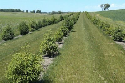Agroforestry Can Boost Profits and Help Save the Planet