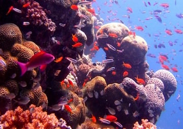 Studies of Two Reefs Reveal They May Be Damaged Beyond Recovery
