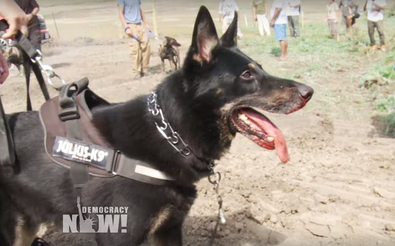 Standoff at Standing Rock: Even Attack Dogs Can't Stop the Native American Resistance