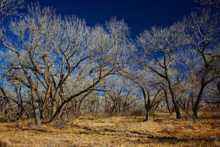 Transborder Immigrant Tool Series: Cottonwoods and Animal Tracks Will Lead to Water in the Desert