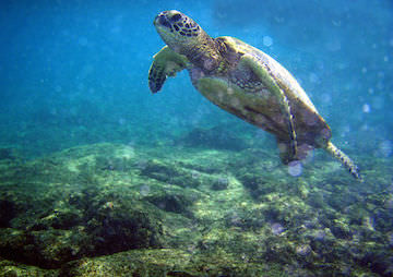 Populations of Marine Life Have Declined by Half Since 1970
