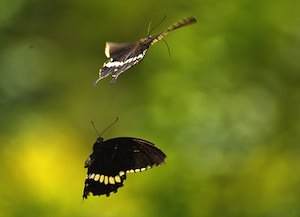 Early Birds and Insects May Go Hungry