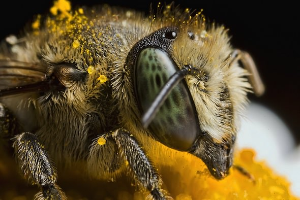 Bee-Killing Pesticides in 51 Percent of 'Bee-Friendly' Plants Sold in U.S. and Canada