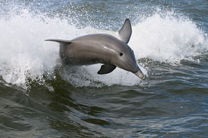 Baby Dolphins Are Washing Up Dead Along the Gulf