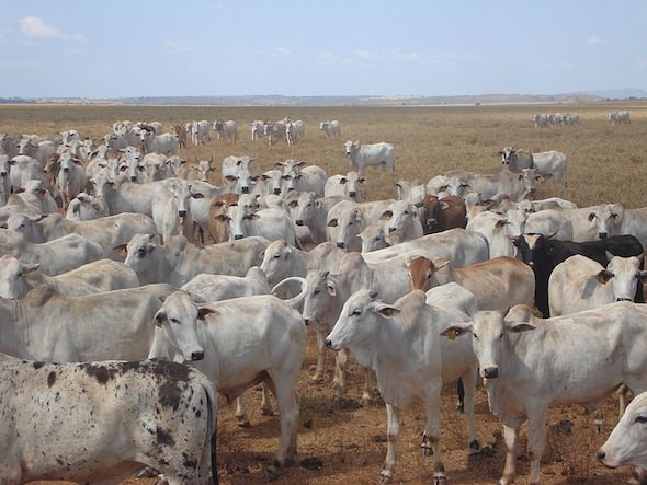 Brazil Beef Tax Could Spare Forests