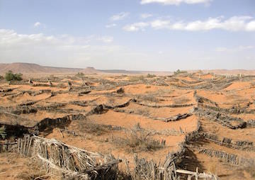 Land Degradation Could Create 50 Million Climate Refugees Within a Decade