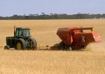 Weather Extremes Slash Cereal Yields