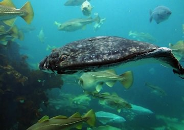 Climate Change Triggers Threats to Marine Ecosystems