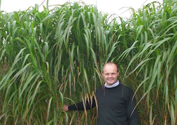 Elephant Grass Could Offer Viable Alternative to Coal