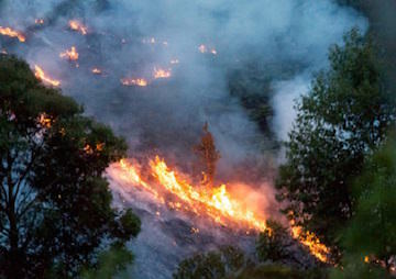 Delegates Accused of 'Fiddling' While the Planet Burns
