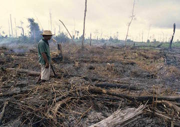 Forest Loss and Land Degradation Fuel Climate Crisis