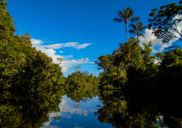 Is Everything We Were Told About the Amazon a Lie?