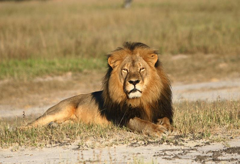 No Justice for Cecil the Lion