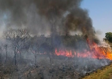 Climate Change and Potential New Laws Fan Brazil's Forest Fires