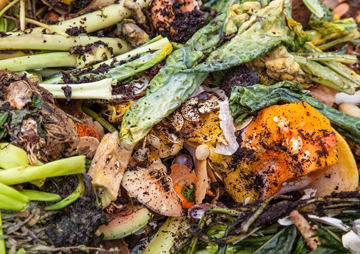 If We Stopped Wasting Even Just a Bit Less Food, We Could Feed Everyone on Earth