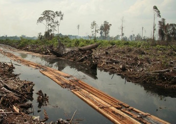 Forest Destruction Can Be Cut by Half