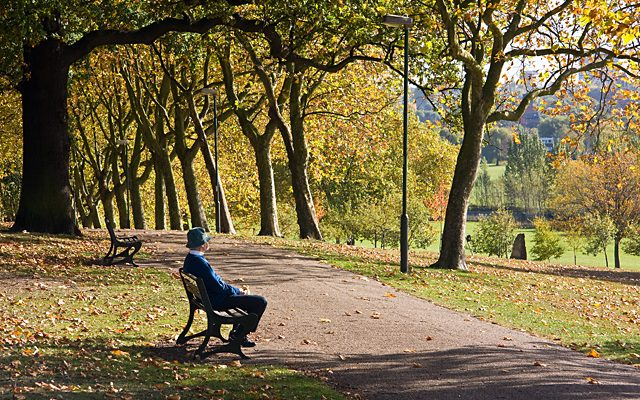 City Trees Boost Health and Wealth