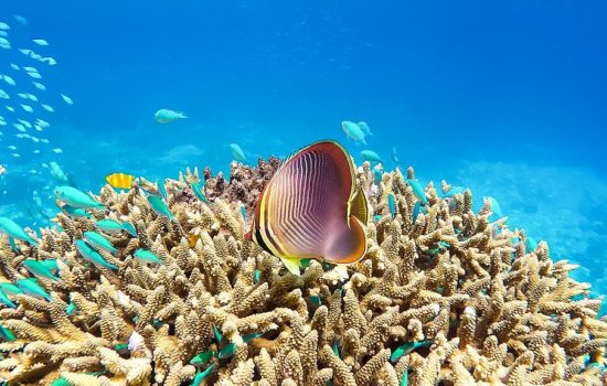 How Ordinary People Can Help Ailing Oceans