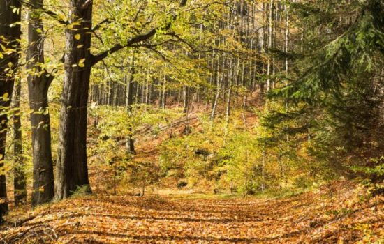 Mixed Forests May Not Resist Climate Change