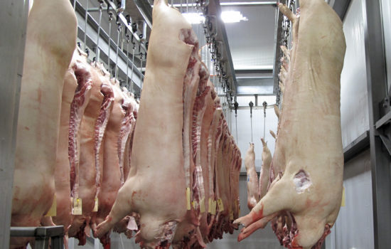 Report Details Filthy Conditions in U.S. Meat Plants