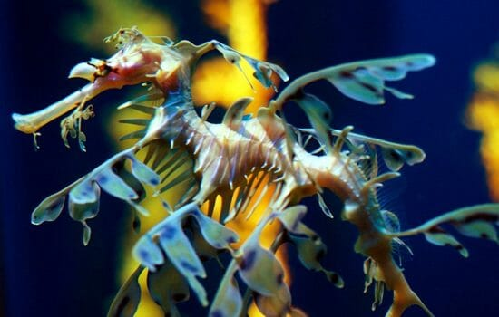 Kelp Forests Under Threat From Acid Seas