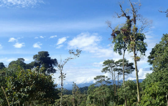 Dying Tropical Forests Could Threaten Much of the Earth's Life
