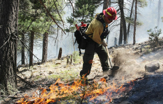Administration Plans to Slash Fire Science Funding