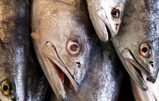 Sense of Smell in Fish Diminishes in Acidic Seas