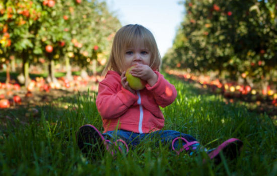 'An Apple a Day' Isn't Possible for Everyone