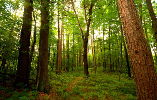 Scientists Propose Restoring Forests to Fight Climate Change
