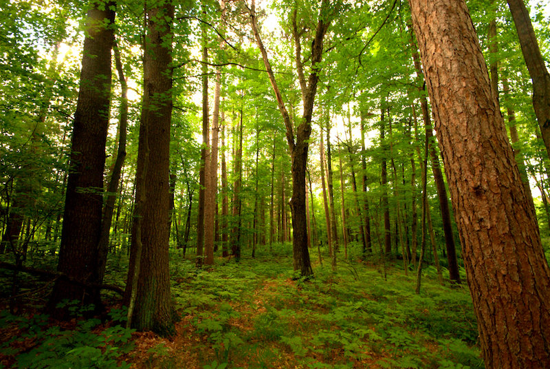 Scientists Suggest Restoring Forests to Fight Climate Change