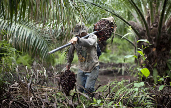 Researchers Say Companies Should Publicly Disclose Palm Oil Suppliers
