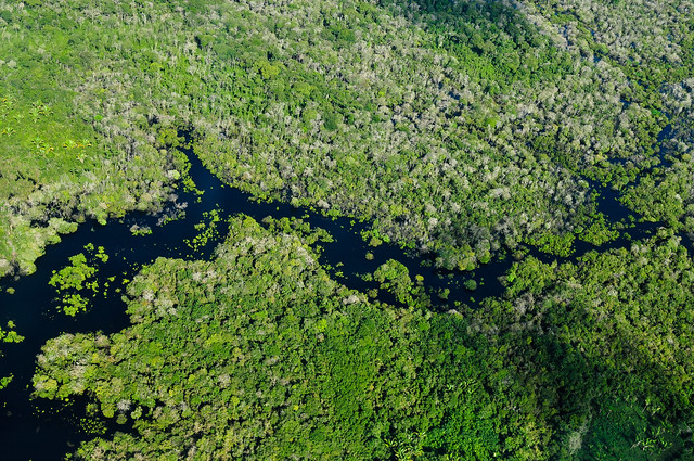 Neocolonialism Will Spell the Amazon's Demise