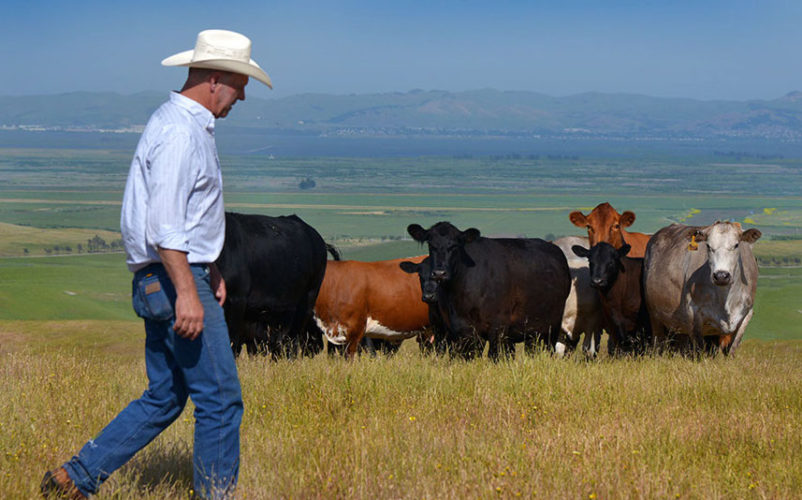 Trump Is Betraying America's Ranchers With NAFTA 2.0
