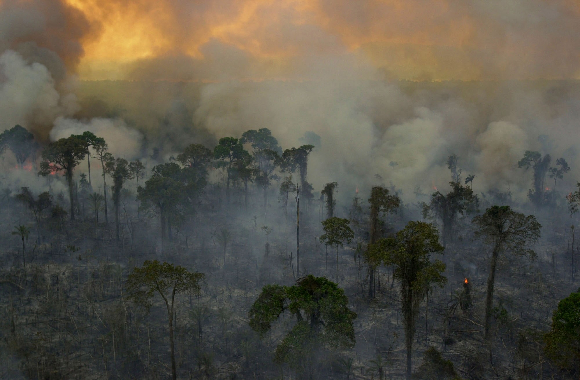The Amazon Is Burning, and the Entire Planet Is at Risk